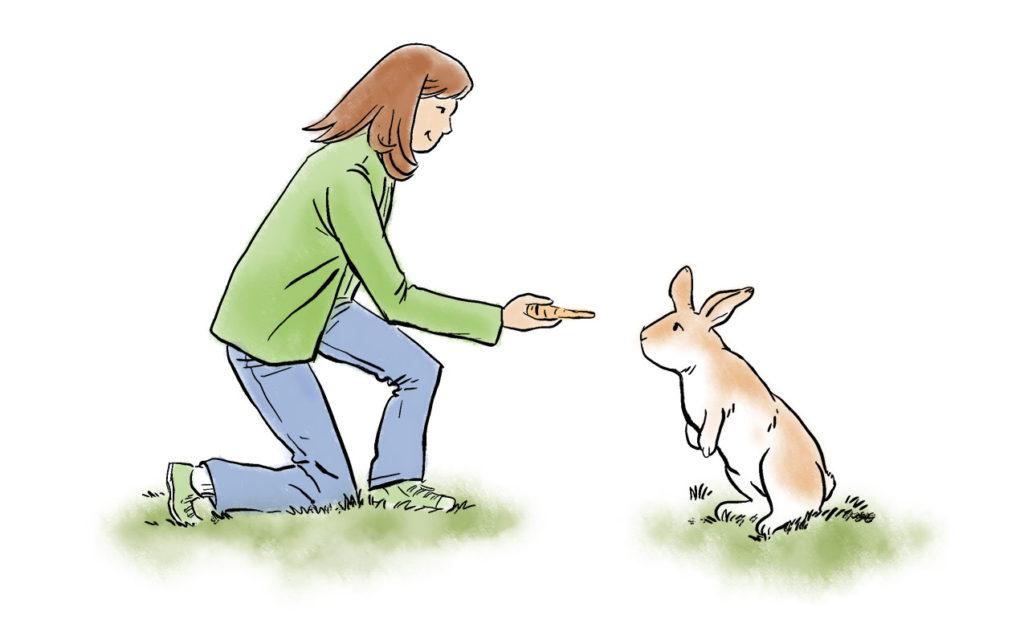 Bunny Rabbit featured image